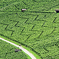 Zig-zag In Vineyards by Ursula Sander