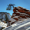Zion National Park In Winter by Bob Christopher