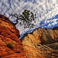 Zion Lone Tree by Chris  England