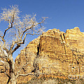 Zion Winter Sky by Bob and Nancy Kendrick
