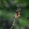 Zipper Spider by Kelly Kitchens