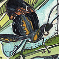 Zippy The Butterfly by Mindy Newman