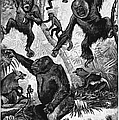 Zoology: Primates, 1883 by Granger