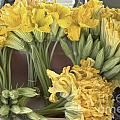 Zucchini Blossoms by David Bearden