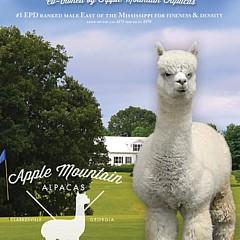 Apple Mountain Alpacas - Artist