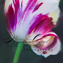 Nancy Carol Photography - Artist
