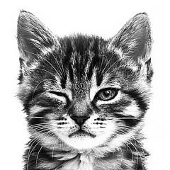 Winking Kitten Photography - Artist