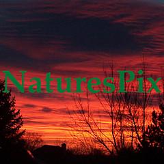 NaturesPix  - Artist
