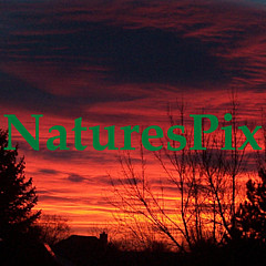 NaturesPix