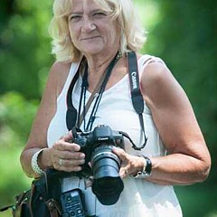 Carol Ward