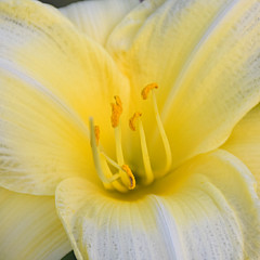 Davis FlowerPower