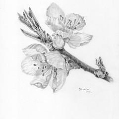 Brenda Hill - Artist