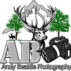 Andy Beattie Photography - Artist