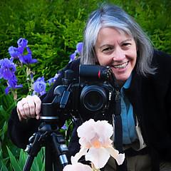 Anita Pollak - Artist