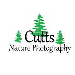 David Cutts - Artist