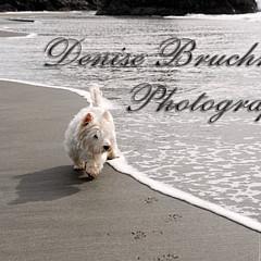 Denise Bruchman - Artist