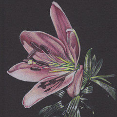 Elizabeth Dobbs - Artist