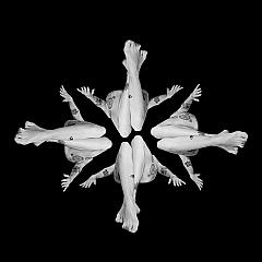 The Mindseye Photography - Artist