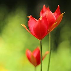 Florafotographica Highet - Artist