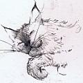 Jackie Simmonds - Artist