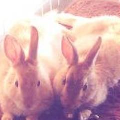 GoGoGo Rabbits