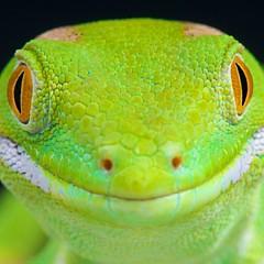 Reptiles4all