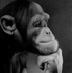 Miro Gradinscak - Artist