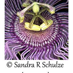 Sandra R Schulze Photography - Artist