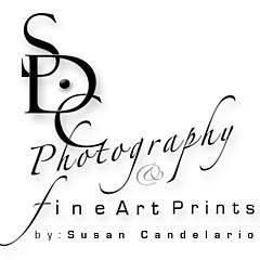 Susan Candelario - Artist