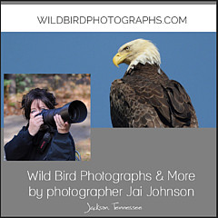 WildBird Photographs - Artist