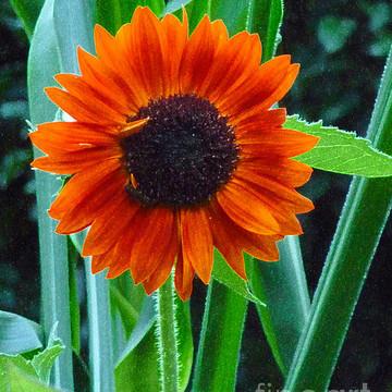Botanicals and Garden Views Collection