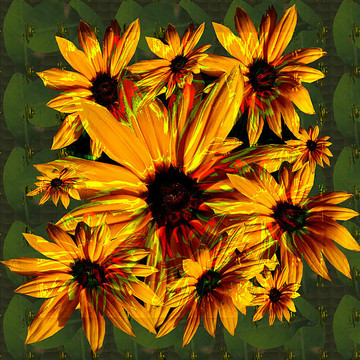 Flowers Art   Graphics and Photography Collection