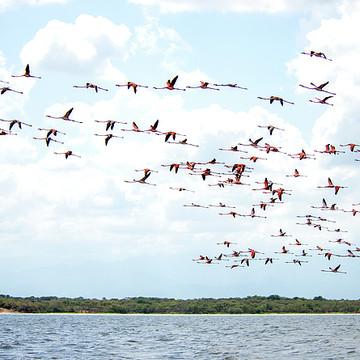 Colombia Wildlife Sanctuary of Flamingos Collection