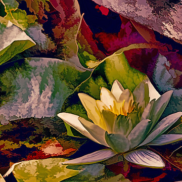 Flower Series - Water Lilies Collection