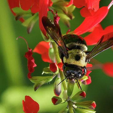 Plants & Insects