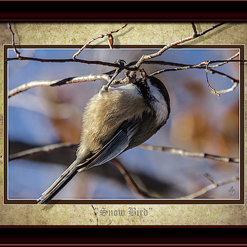 3D Canvas Prints