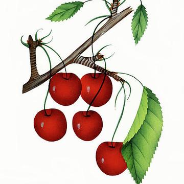 Vintage Delectable Fruits