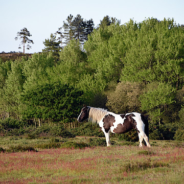 Photography - views of Dorset and the New Forest England