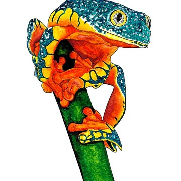 Reptiles and Amphibians - ink and watercolour works