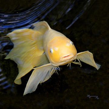 Sea life  amphibians and reptiles
