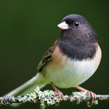 Seasonal Songbird Portraits