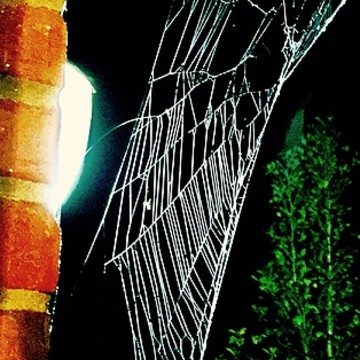 Spiders Spider Webs and Insects
