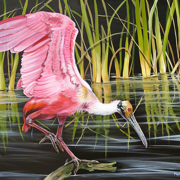 Wading and shorebird   paintings