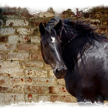 About Horses Collection