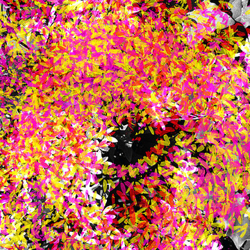 Abstract Floral Photography Collection