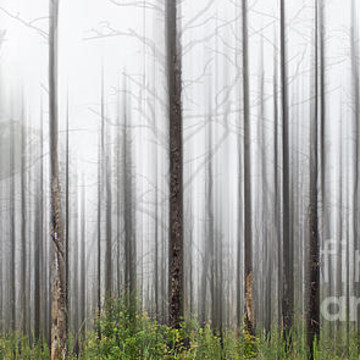 Abstract Trees Collection