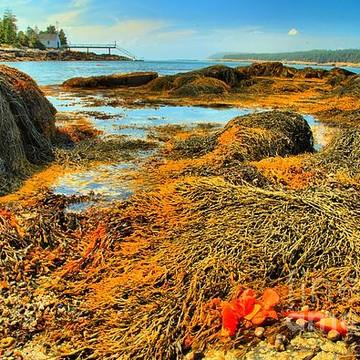 Acadia National Park - Isle au Haut Collection