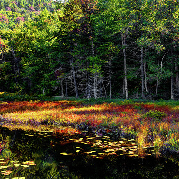 ADK - Cary Lake Collection
