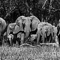 African animals in BW Collection