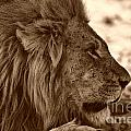 African animals in Sepia Collection